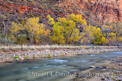 Autumn on the Virgin River_1200_01 (chasingthelight10) Tags: travel autumn trees fall nature photography landscapes utah nationalpark sandstone seasons events places foliage highdesert riverbed rivers vistas zionnationalpark nationalparks canyons riverrocks riverrock bigbend virginriver navajosandstone sandstoneformations rocksandtrees riparianhabitat otherkeywords