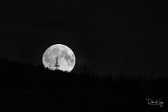 Full Moon Rising (Dan King Alaskan Photography) Tags: alaska fullmoon fairbanks daltonhighway coldfoot sprucetree haulroad sigma80400mm canon50d