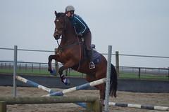 DSC08531 (Schep_B) Tags: dronten paarden springen springles paardensport c