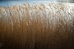 In the long grass (Mister Rad) Tags: london water grass dock canadawater nikon50mmf14 nikond600