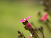 Primavera (jocsdellum) Tags: flowers flores verde green primavera spring verd flors lamanoamiga