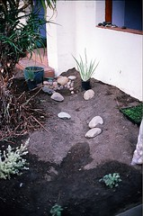04560032-84 (jjldickinson) Tags: plant garden landscaping longbeach wrigley olympusom1 droughttolerant xeriscaping fujicolorsuperiaxtra400 lawntogarden promastermcautozoommacro2870mmf2842 promasterspectrum772mmuv roll490o2