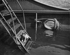 """""""Abandon"""" (Pic_4) Tags: dog white black water stairs photography flood abandon flickrandroidapp:filter=none"""