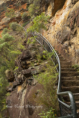 The steep steps on National Pass in the Blue Mountains, Sydney Australia (Anna Calvert Photography) Tags: park trees nature stairs landscape sydney trails australia bluemountains hike staircase valleyofthewaters nationalpass nationalpasshikingtrail wentworthfallstrail