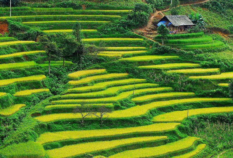 Ruong-bac-thang-o-Mu-Cang-Chai