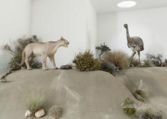 fauna embalsamada (► ► www.giselas.com.ar ◄ ◄) Tags: fauna sur patagonia embalsamados museo punta tombo chubut avestruz zorro gris