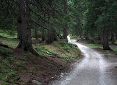 06-IMG_8427 (hemingwayfoto) Tags: österreich austria baum europa fichte hohetauern landschaft nationalpark natur naturschutzgebiet rauris reise tannenbaum urwald wald weg