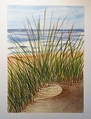 Oyats des dunes (Philippe Demeyere) Tags: dune dunes oyat oyats merdunord sable mer plantes