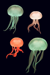 Coloured moon jellyfish (Aurelia aurita) (Ian Redding) Tags: aurelia aureliaaurita cnidaria ulmaridae animals aquarium bell coloured colourful colours commonjellyfish dark floating gonads isolated jellies jellyfish lights marine medusa medusae moonjelly moonjellyfish nature saucerjelly swimming tank tentacles translucent water wildlife