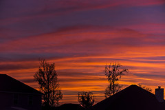 SIlhouettes Over Molten Velvet (J Swanstrom (Check out my albums)) Tags: nikon d750 jswanstromphotography sunset clouds sky colors orange purple evening molten velvet suburban trees silhouette