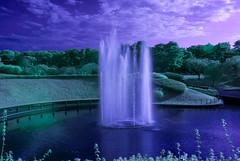 Infrared Fountain In Hitachi Seaside Park (aeschylus18917) Tags: danielruyle aeschylus18917 danruyle druyle ダニエルルール japan 日本 infrared ir surreal 赤外線 ibaraki 茨城県 hitachi 日立市 hitachiseasidepark 国営ひたち海浜公園 autumn fall 秋 2485mm fountain pond park pxt