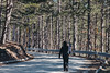 Freebord (Luigi Pica) Tags: freebord skate freeboard extreme sport nikon panning capture exploring nature trees road