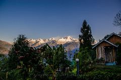An early morning glimpse of the Icebeards from the resort (Arnox20X) Tags: incredibleindia sikkim himalayas ravangla monastery travel bug