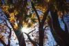 Shining through (Syahrel Azha Hashim) Tags: autumnseason autumn nature sony 2016 fall lightburst nopeople simple trees details a7ii branches ilce7m2 yellowleafs sunny tree season kyoto getaway handheld bluesky colorimage vacation holiday prime light fallseason naturallight seasonal colorful 35mm beautiful travel syahrel sonya7 shallow colors leafs dof backlight japan detail