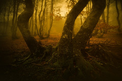 Three (JD Photographie.) Tags: cevennes gard europe france languedoc roussillon montagne mountain autumn tree leave automne leaves mood fog wood forest mist foggy