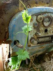 Planta de tractor. Crecimiento 1. Tractor plant. Growing 1. (Esetoscano) Tags: madrid españa tractor abandoned spain cabin rusty cabina growing bud crecimiento climbingplant oxidado abandonado brote lasmatas plantatrepadora
