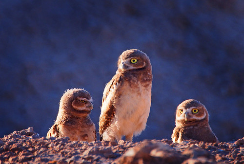 Three little hootie chicks this year! ;-)