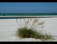 Summer Fun (DugJax) Tags: gulfofmexico florida ami fl seaoats annamariaisland efs1755mmf28isusm canonrebelt2i
