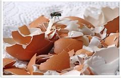 aus dem Ei gepellt! -  spick and span!