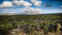 Kilimandjaro - Jour 3 - Shira 1 - 072