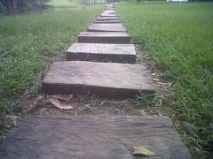 El camino trazado (Caneckman) Tags: naturaleza tabasco villahermosa
