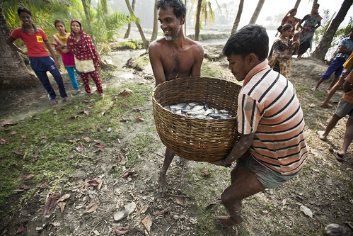 Men ready to upturn the morning's catch in Khulna, Bangladesh. Photo by Felix Clay/Duckrabbit.