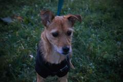 Lilli (Sabrina Corrado) Tags: winter dog cute cane canon little sweet cutie inverno passeggiata bastardino 600d meticcio canon600d