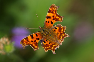 Floating Comma