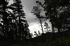 (May Machado) Tags: trees green forest canon eos rebel woods cloudy gray chuva bosque nublado cinza t3i eucalipto eucaliptos rainyweather