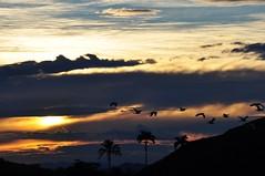 FREEDOM always... (Ruby Augusto) Tags: sunset birds coconut hills pôrdosol estrada ontheroad pássaros coqueiros brasilemimagens