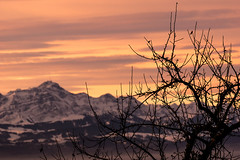 fallen leaves (P@trick K) Tags: morning pink schnee orange mountain lake snow mountains alps tree yellow fog sunrise see nebel gelb alpen bodensee baum sntis lakeconstance
