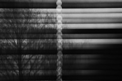 backyard (Juliet Alpha November) Tags: morning bw white black tree window pattern jan fenster linie jalousie lin