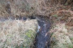 LA BREILE LES PINS (13) (PURÊN MICHEL 49) Tags: riviere lac etang leau marecage