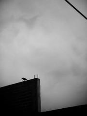(Daniel Iván) Tags: urban blackandwhite cloud naturaleza bird blancoynegro nature animal clouds blackwhite cityscape cloudy minimal ave nubes urbano minimalism rule cloudscape nube valledebravo thirds blackwhitephotography blackwhitephoto blackwhitephotos fotografíablancoynegro danielivan danieliván