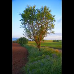 spring is coming (christian&alicia) Tags: landscape landscapes nikon sigma catalonia catalunya camps 18200 gallecs catalogne d90 christianalicia