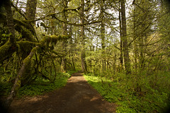 Silverfall State Park forest (Anna Calvert Photography) Tags: trees plants green nature leaves forest landscape moss forestfloor hikingpath silverfallstatepark