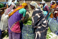 India - Kerala - Munnar - Tea Harvest - 102 (asienman) Tags: india mountains kerala hills teafactory teaplantation munnar teapicker asienmanphotography teaplantagens