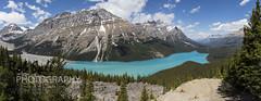 Peyto Lake, Alberta Canada (robsall) Tags: canada canon panoramic alberta banff rockymountains canoneos banffnationalpark canadianrockies 24105 2015 banffnp 24105f4isusm banffcanada banffpark canon24105mm canon24105f4isusm canon5dmarkiii 5dmarkiii 5dm3 5dmark3 5dmiii robsall canon5dm3 canoneos5dm3 robsallwildlifephotography robsallphotography banffnationaparkcanada