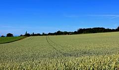 Bls verts (Diegojack) Tags: perspectives campagne paysages vaud bls vaudoise aclens bremblens