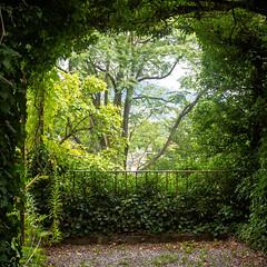 198/365: Secret Garden (haslo) Tags: trees green leaves garden schweiz switzerland secret olympus hidden bern gravel omd em1 project365 115in2015