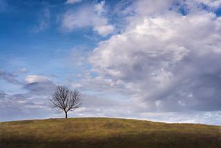 Lone Tree Vs 3