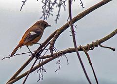 _DSC8565 (aeschylus18917) Tags: danielruyle aeschylus18917 danruyle druyle ダニエルルール japan 日本 kagoshima 鹿児島県 amamioshima 奄美大島 uushima kyushu 九州県 bird 鳥