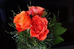 Schönen Sonntag! (Gartenzauber) Tags: floralfantasy saariysqualitypictures doublefantasy