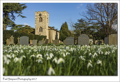 St Peters and St Paul, Kettlethorpe, Lincolnshire (Paul Simpson Photography) Tags: paulsimpsonphotography nature sonya77 photosof photoof imagesof imageof church snowdrops flowers february2017 history historic building lincolnshire westlindsey spring graves headstones bluesky england photosofengland rural kettlethorpe