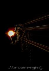 Nice week for All of You (patrick.verstappen) Tags: texture textured photo picassa pinterest pat ipernity ipiccy moon plant gingelom google garden flickr facebook sigma winter weed frozen spider belgium nikon d7100