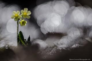 Coucou le printemps