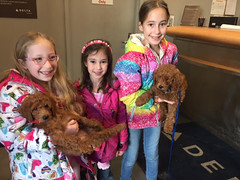 Ruby Red's puppies few on the same flight to their new families!