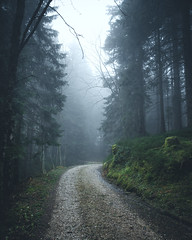 Mood in the Wood (noberson) Tags: fog mood moody foggy mist forest green cold light soft path pathway road switzerland schweiz gantrisch naturpark nature woods wood magic fairytale
