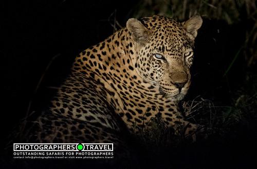 Sandriver Leopard