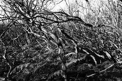 Scorched (njleach) Tags: leica 35mm landscape photography blackwhite sydney australia summilux m9p